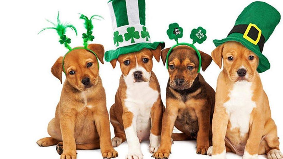 Raleigh St. patricks Day pup crawl